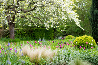 Ulting Wick garden in Spring. Owner/Designer: Philippa Burrough