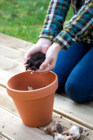Female gardener filling up terracotta pot with soil after planting a bulb.
