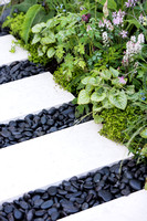 Limestone paving slabs, separated with black oval stones surrounded by Tiarella 'Spring symphony'.