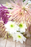 Chrysanthemum 'Radost' and Chrysanthemum 'Anastasia Star Pink'