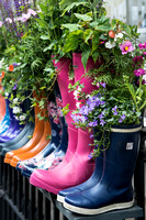 Planted Wellingtons
