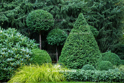 Clipped topiary